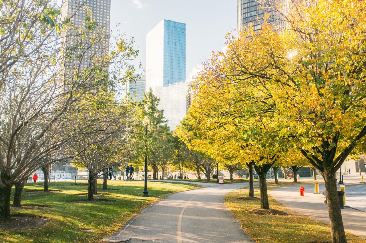Autumn Chicago Footpath Outdoors Park Park - Man Made Space Season  Street Urban