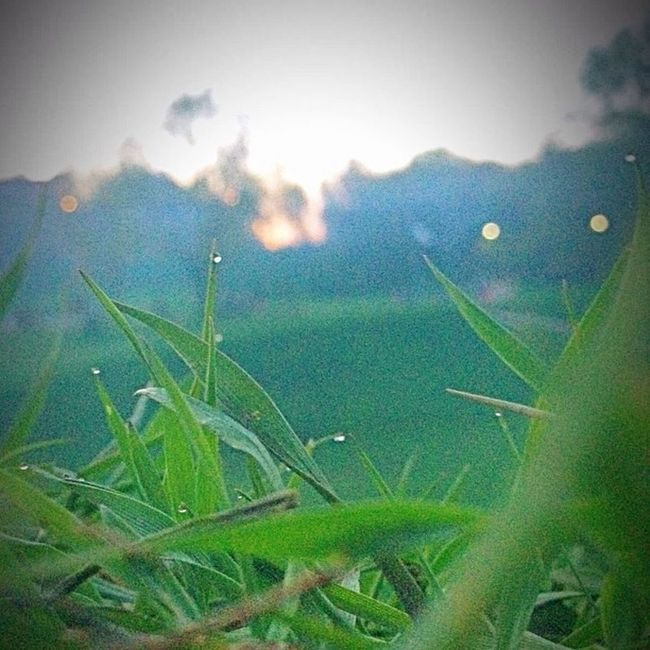 Moscow Valley Setun Grass Exposition of the Picture is Super Sunset City Dew Evening Yesterday Masterpiece Green Unrealistic to Cool the Best  Alone Photo of the May World Russia Original Antkuz Summer spring beautiful