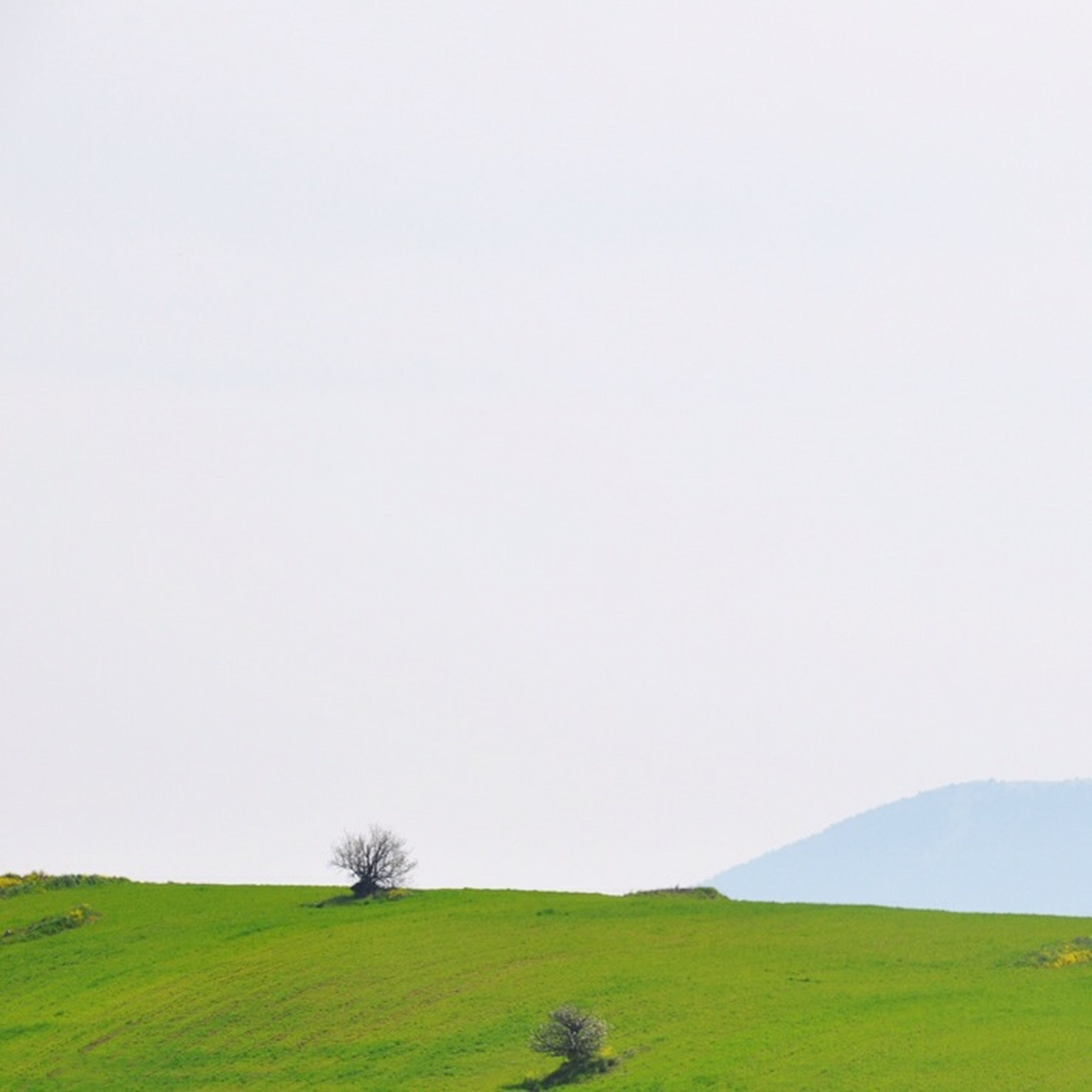 grass, clear sky, copy space, landscape, tranquil scene, tranquility, field, scenics, grassy, beauty in nature, green color, nature, non-urban scene, mountain, day, horizon over land, solitude, remote, countryside, growth