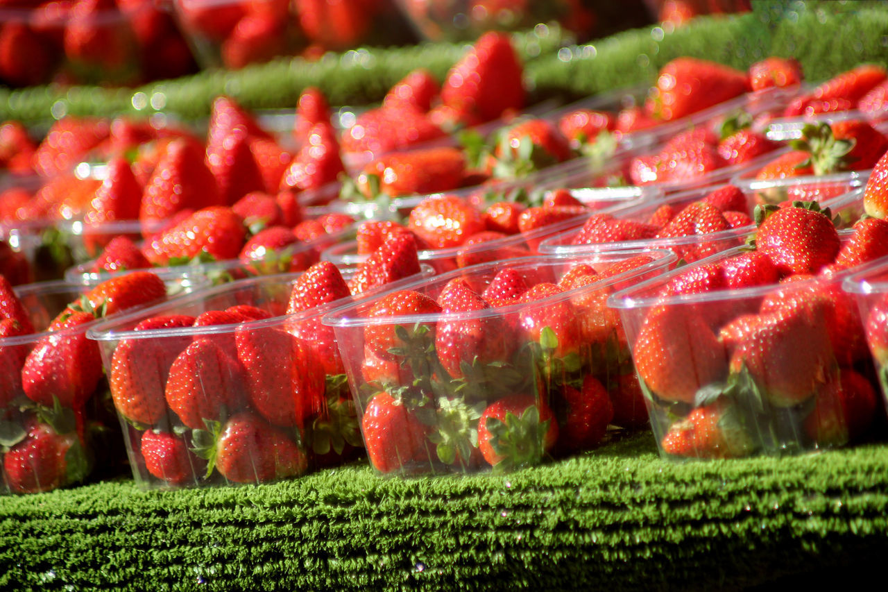 Abstract Strawberries Agriculture Close-up Day Food Food And Drink Freshness Fruit Grass Green Color Healthy Eating Indoors  Nature No People Red Strawberry Tending To Crops Tennis Championship Wimbledon