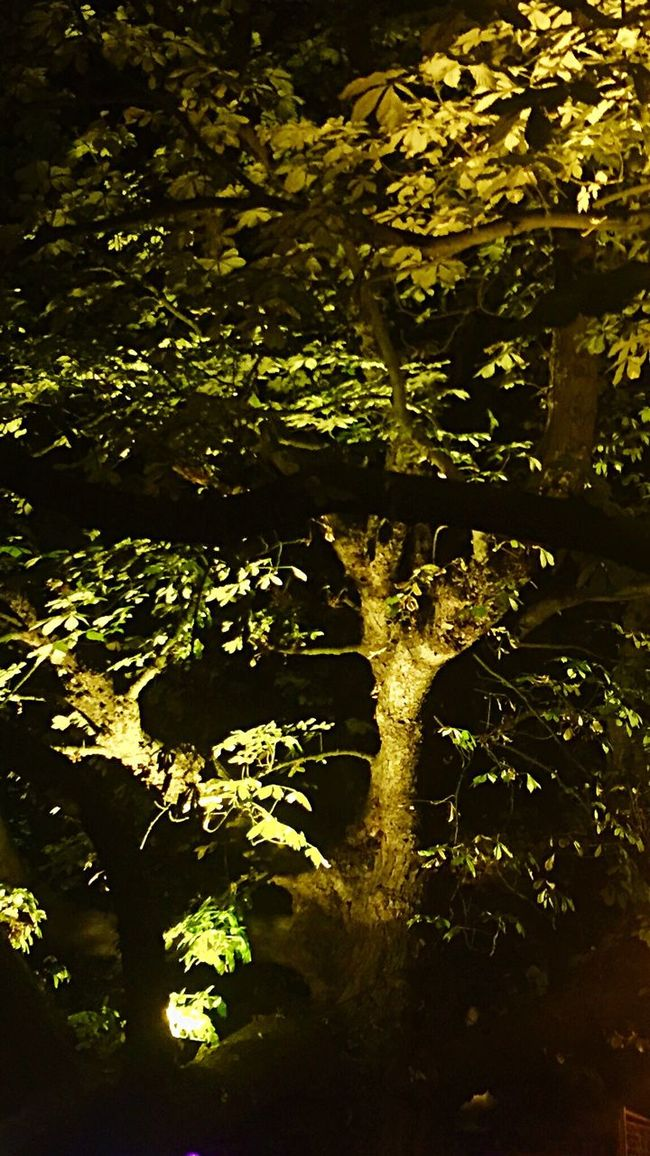 Nightphotography Night Tree Trees Light And Shadow Green Nature Nature_collection EE Love Connection! Eye4photography  Utrecht Eeyem Photography EyeEmBestPics Photography Outdoor Photography
