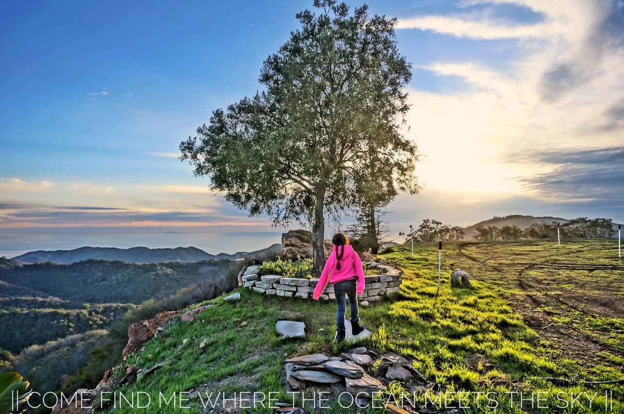 || Come Find Me Where The Ocean Meets The Sky || Tree Ocean View Ocean Sky HDR Malibu Castropeak Nature Daughter Art Life Love Peace Inspire Mountains Malibu Coast Malibu Hills Existence Breathe Photographicart Hdrphotography Hdr_Collection Music Poetry