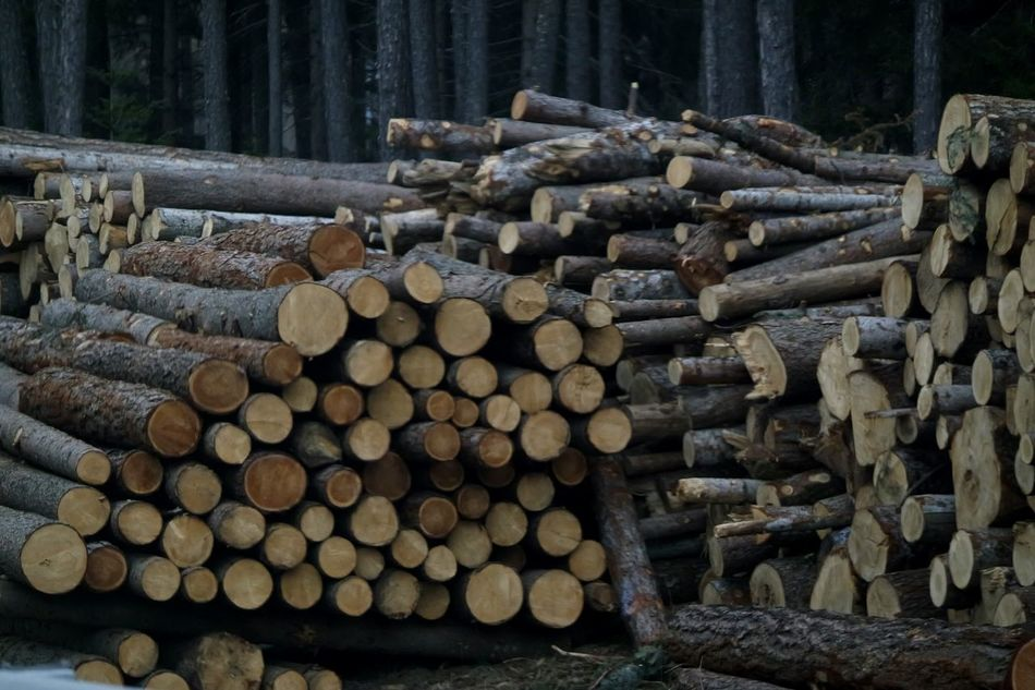 How Do We Build The World? ????? Cutting Trees Trees Wood Stop Cutting Trees Leave Us Breath Be Green