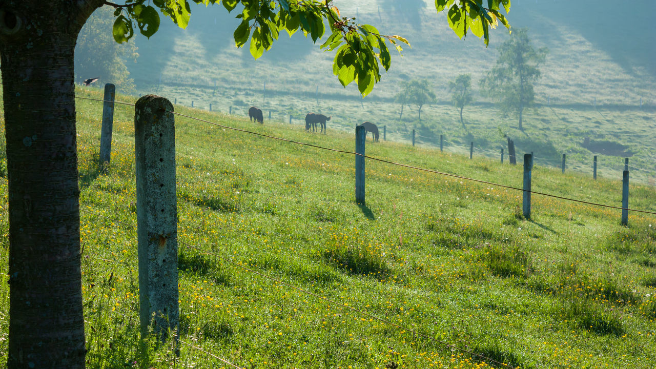grass, no people, protection, nature, field, scenics, safety, tranquil scene, green color, day, beauty in nature, tranquility, wooden post, outdoors, tree, rural scene, landscape, sky