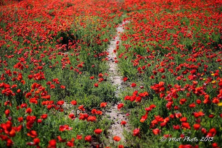 Poppies Field First Eyeem Photo