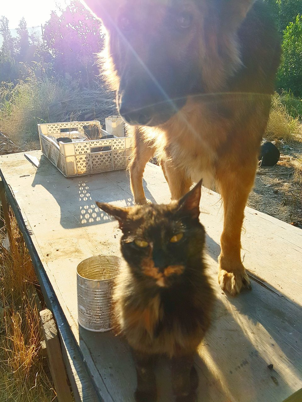 domestic cat, animal themes, mammal, pets, domestic animals, one animal, feline, day, sunlight, outdoors, shadow, no people, sitting, portrait