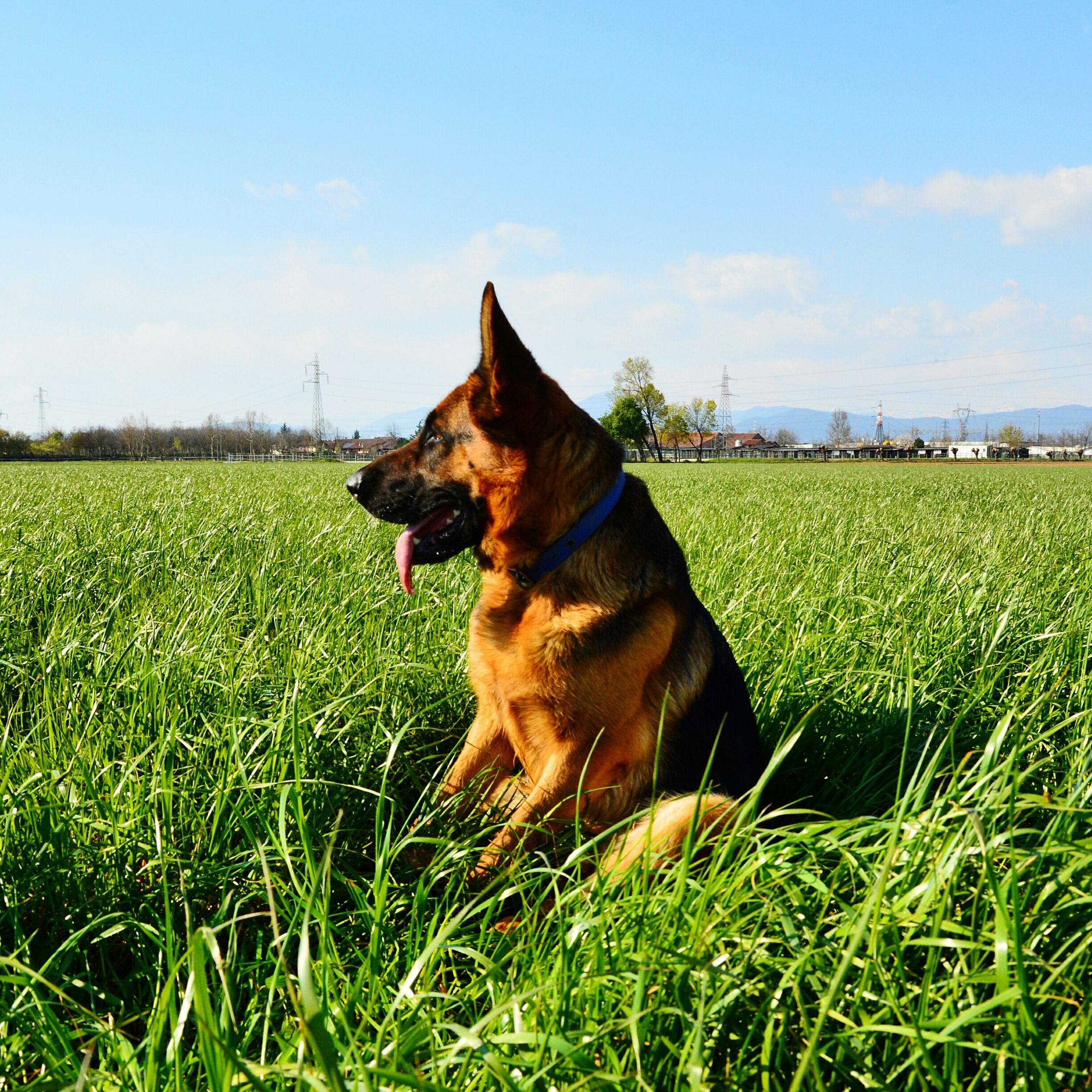 domestic animals, grass, pets, animal themes, mammal, one animal, field, grassy, dog, green color, sky, landscape, growth, nature, relaxation, sunlight, domestic cat, grassland, day, no people