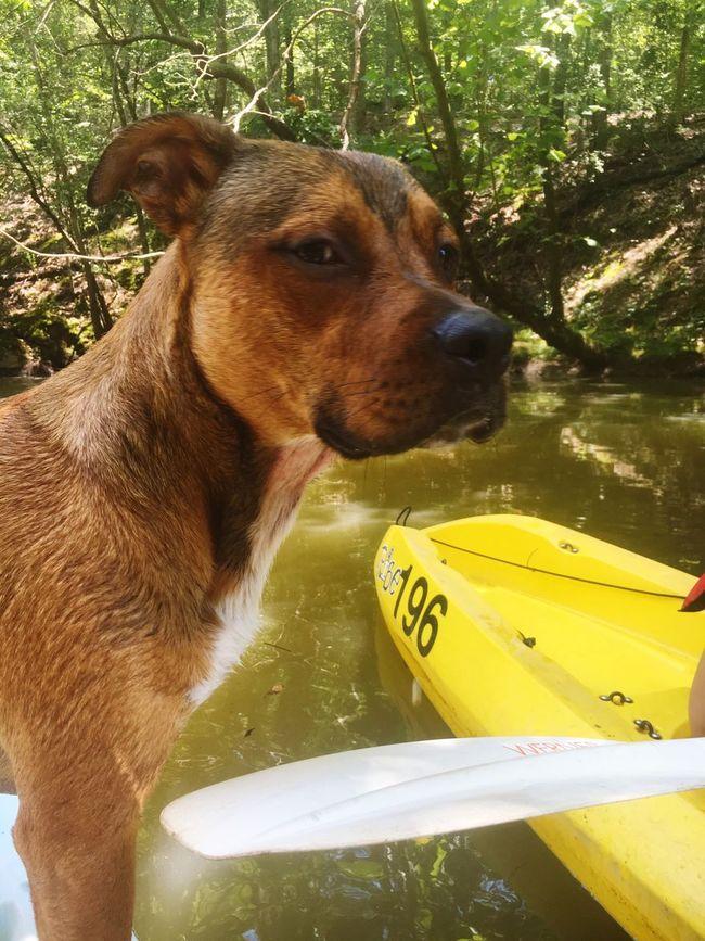 Dog River Fishing First Eyeem Photo