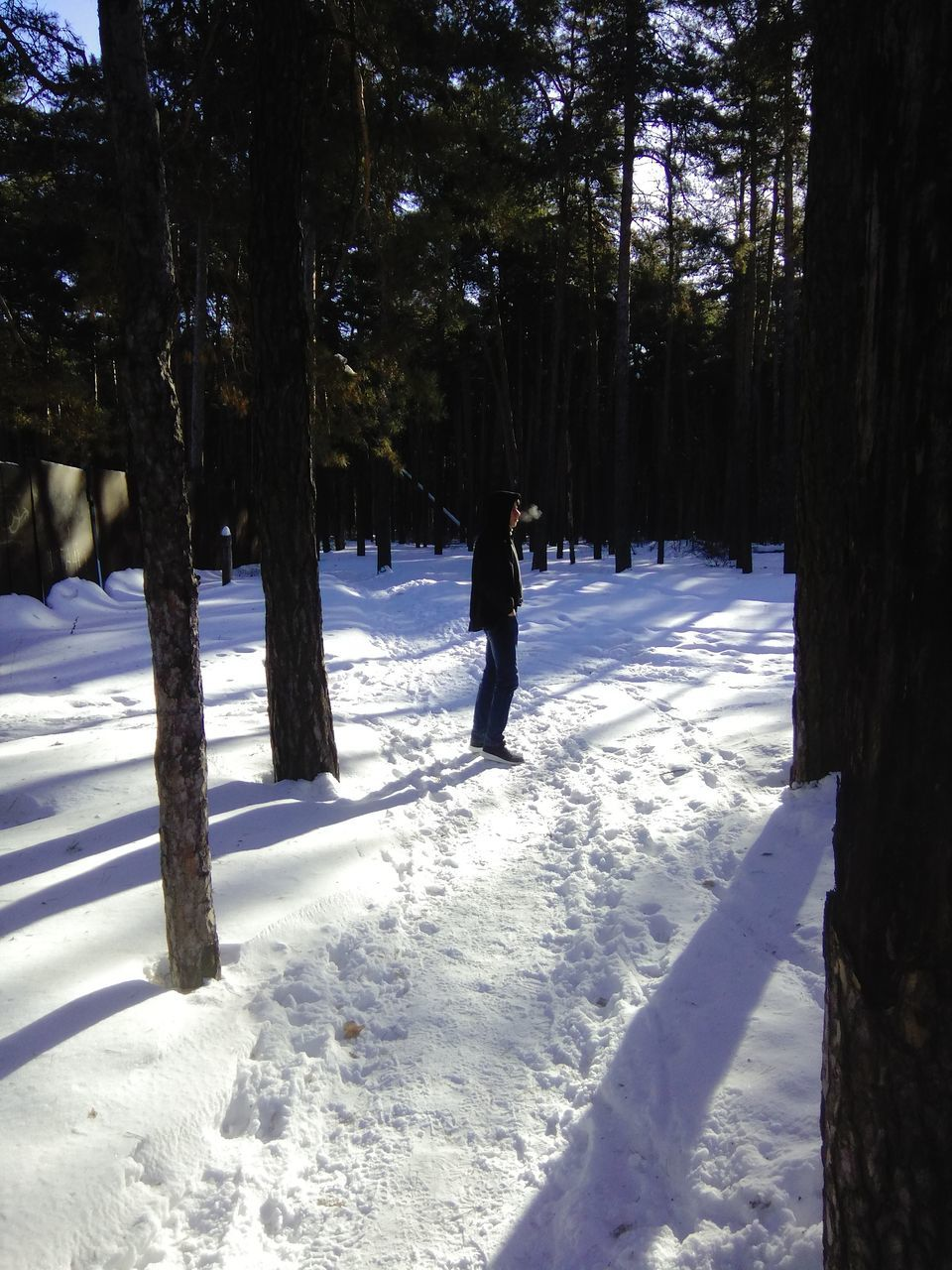 snow, winter, cold temperature, tree, nature, weather, beauty in nature, white color, tranquility, tranquil scene, scenics, tree trunk, field, landscape, frozen, outdoors, forest, day, sunlight, full length, growth, leisure activity, real people, shadow, one person, ski holiday, warm clothing, people