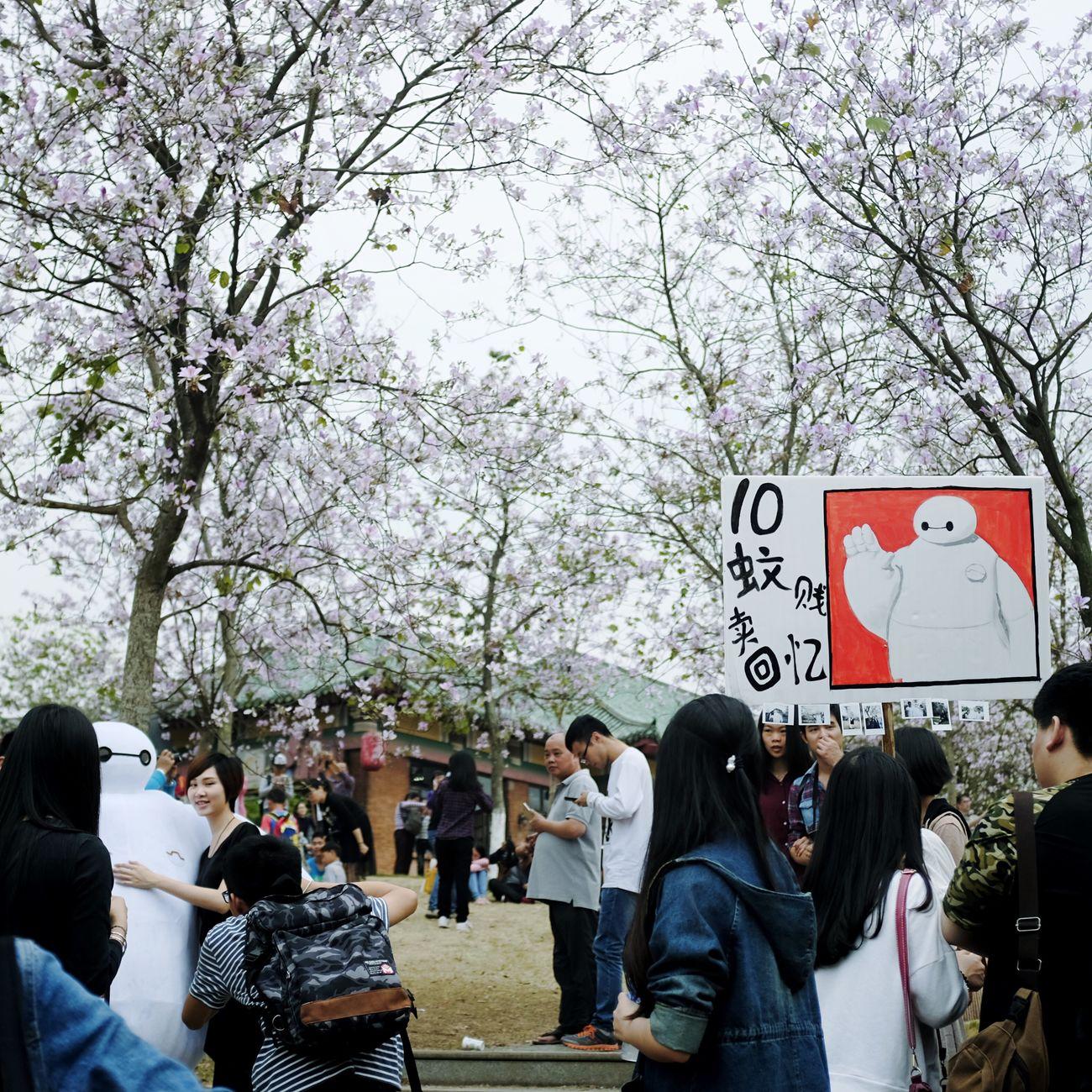 华农紫荆花节 Redbud Fujifilm FUJIFILM X100S Nature Baymax Flowers Spring 广州 紫荆花 富士 First Eyeem Photo