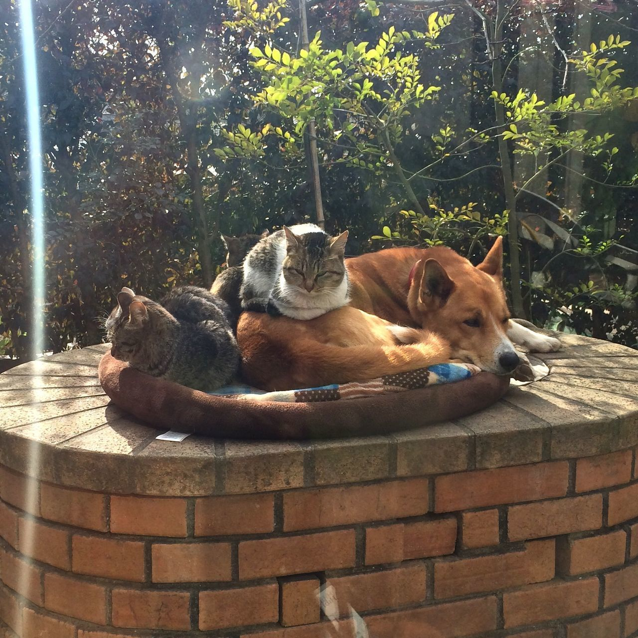 My dog and cats. Dog Cats Funny FUNNY ANIMALS
