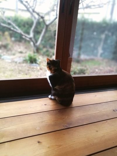 Cute Lovely Sun Light Cat Lovers Calico Cat Shadow Japanese Traditional House House One Animal Animal Animal Wildlife Window Mammal Animal Themes Pets No People Window Sill Wood - Material Day Domestic Animals Domestic Cat Indoors