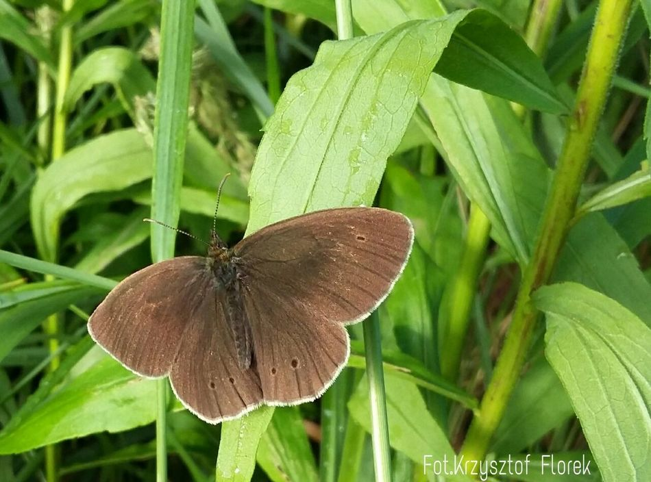 Photography Nature Insects  Butterfly