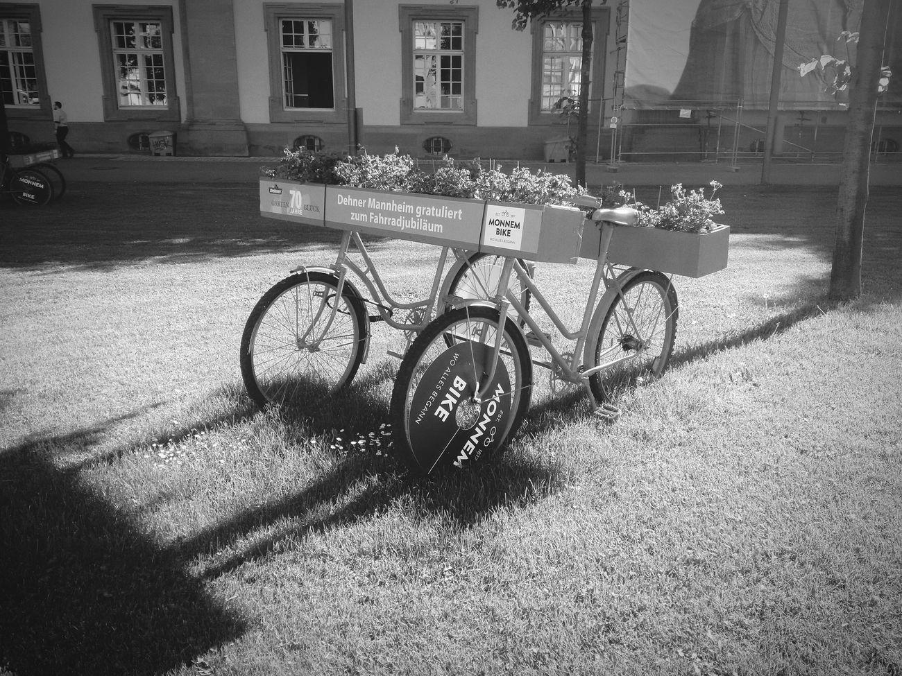 schöne Aktion der Stadt Mannheim oder Monnem zur Erfindung des Fahrrad s Monnem Bike