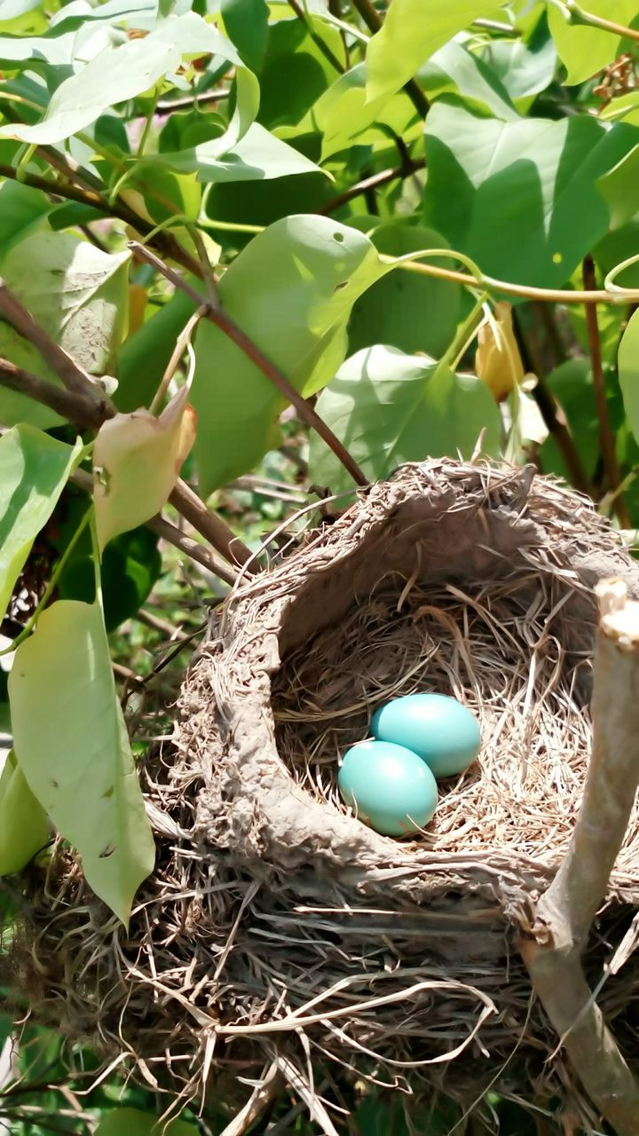 animal nest, bird nest, new life, egg, beginnings, fragility, high angle view, day, no people, leaf, nature, outdoors, green color, close-up, growth, plant, animal themes