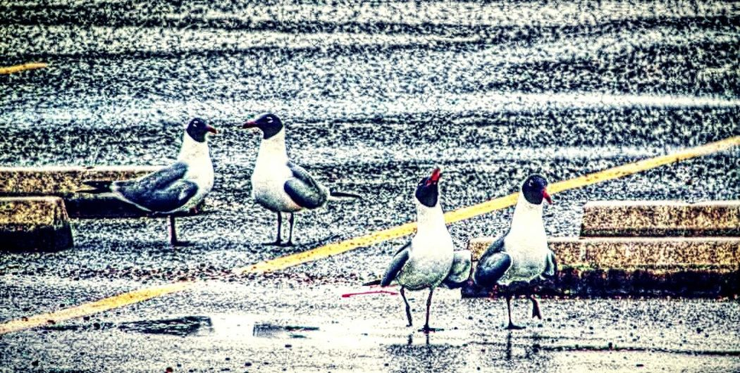 Walking and talking. Check This Out Taking Photos Playing With Filters Seagulls In The City