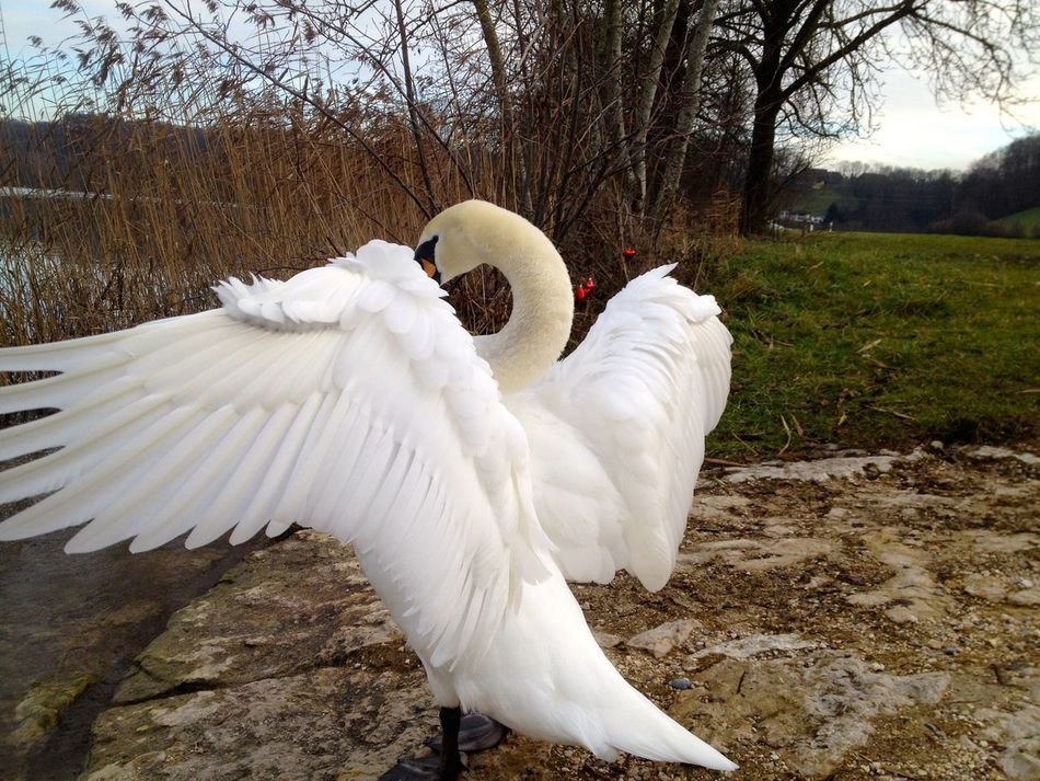 Beautiful stock photos of wings, Animal Behavior, Animal Themes, Autumn, Bush