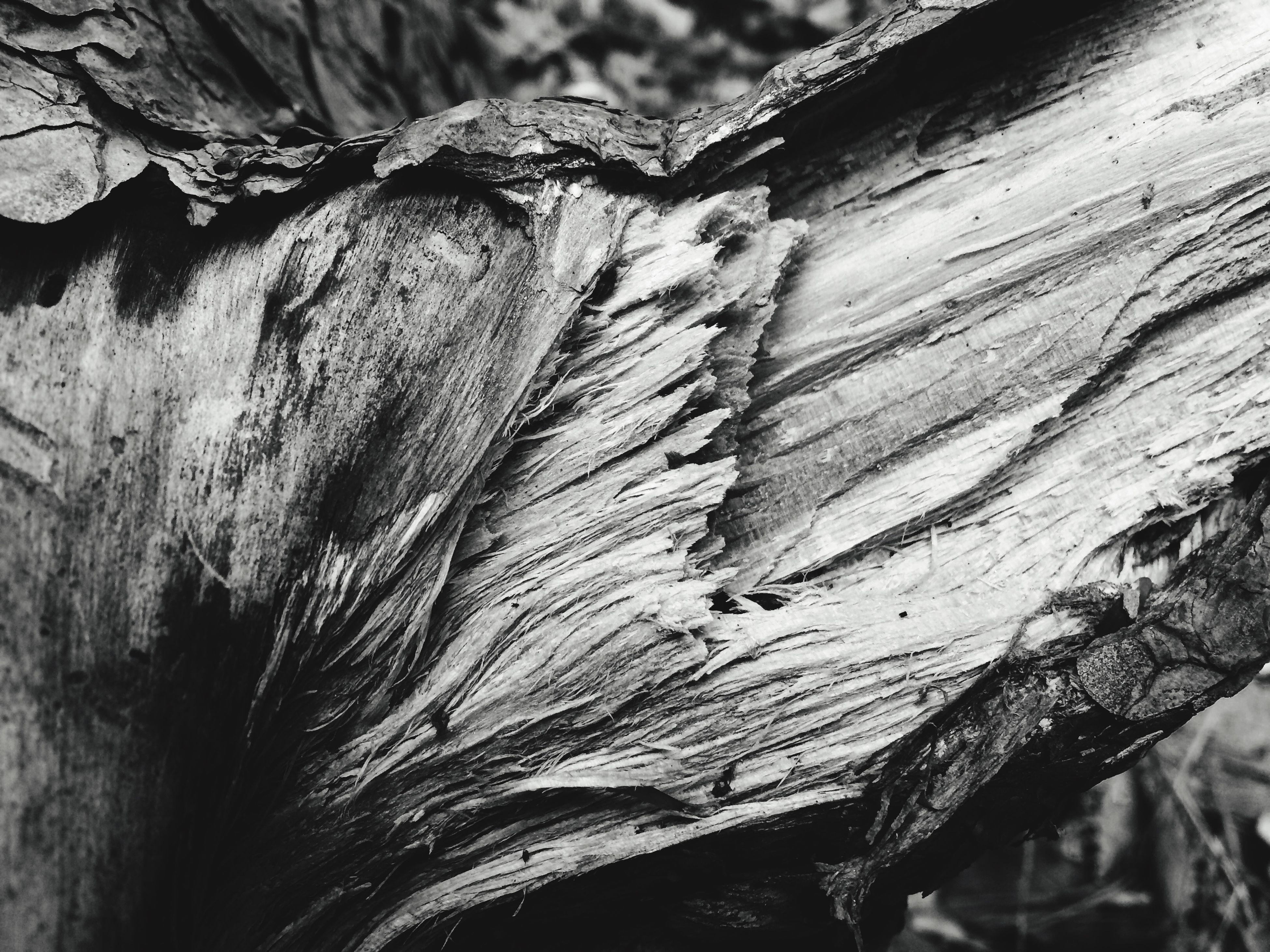 Black & White Outdoors Nature