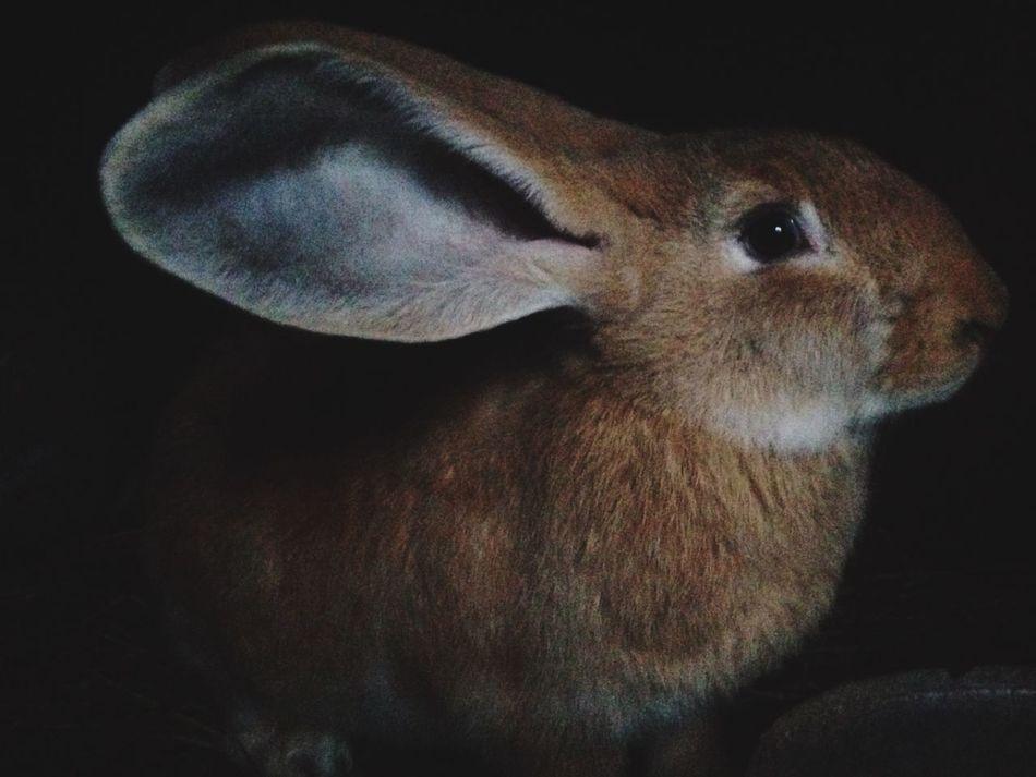 Beautiful stock photos of easter bunny, Animal Body Part, Animal Ear, Animal Hair, Animal Head