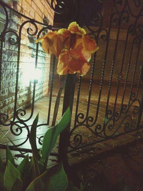 Flowers At Night Taking Photos EyeEm Nature Lover Enjoying Life