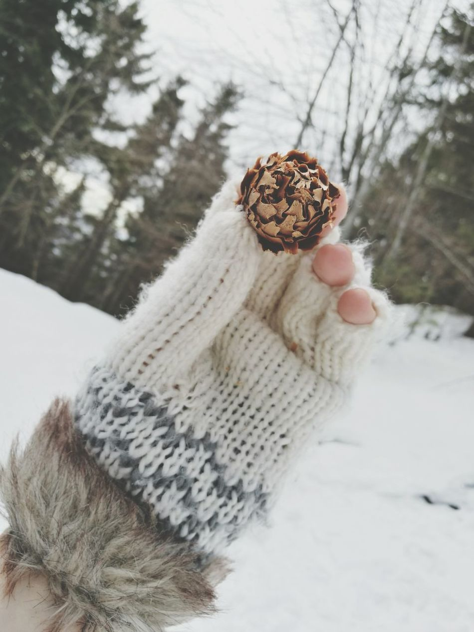 Winter Cold Temperature Close-up Outdoors Warm Clothing Winter Glove Glove Pine Cone Tree Nature Snow Winter Landscape Mountain