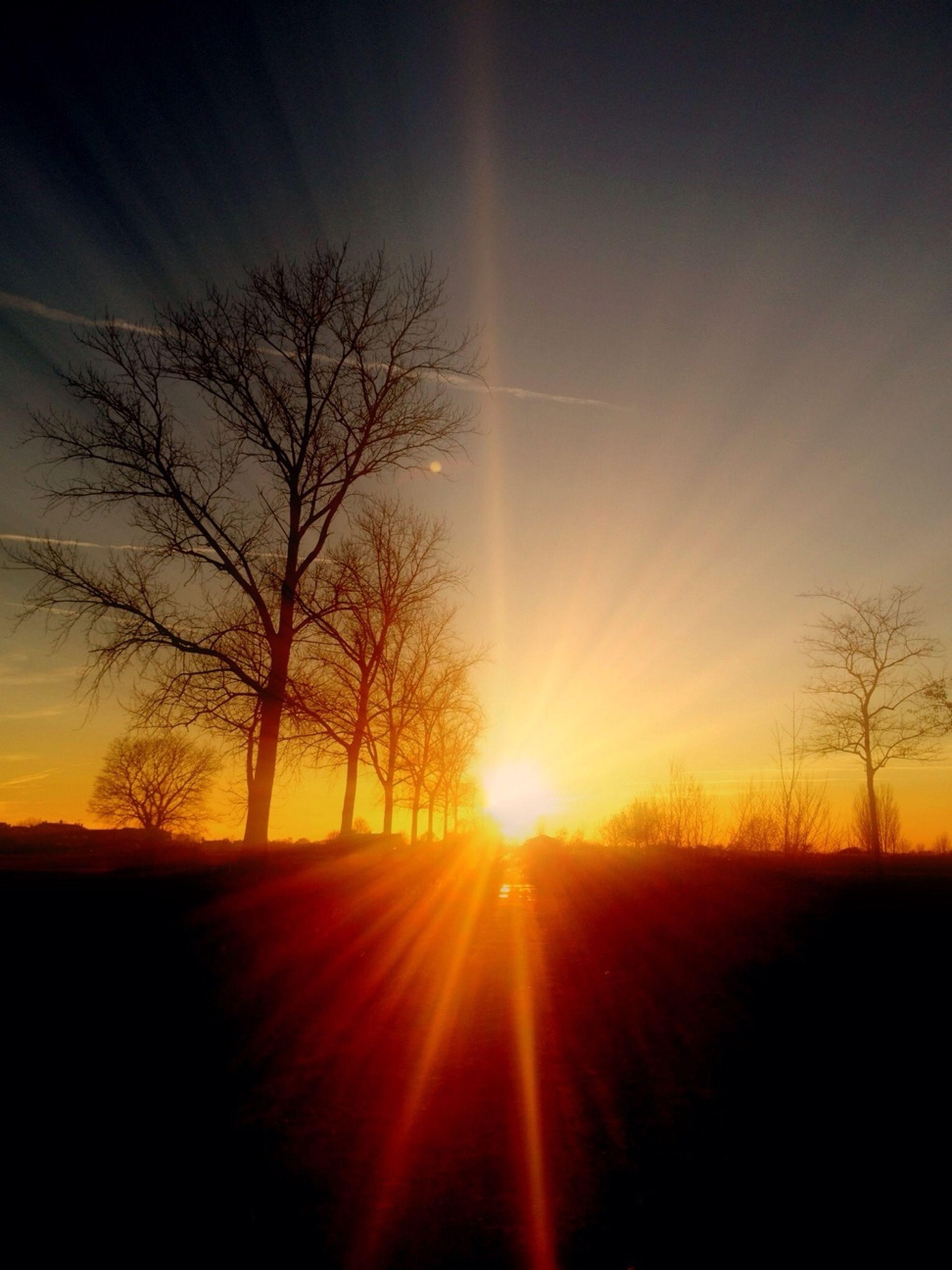 sunset, sun, silhouette, bare tree, tranquility, tranquil scene, scenics, orange color, tree, beauty in nature, sky, landscape, sunlight, nature, idyllic, sunbeam, field, lens flare, branch, back lit