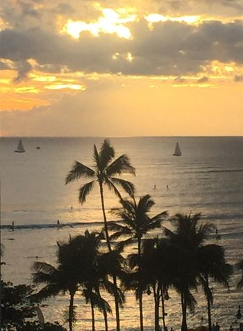 Ocean Sunset Beach Sky Water Horizon Over Water Palm Tree Sun Cloud - Sky No People Silhouette Oahu Hawaii Island Of Oahu, Hawaii Oahu, Hawaii Oahu Oahu Sunset Oahu / Hawaii An Eye For Travel
