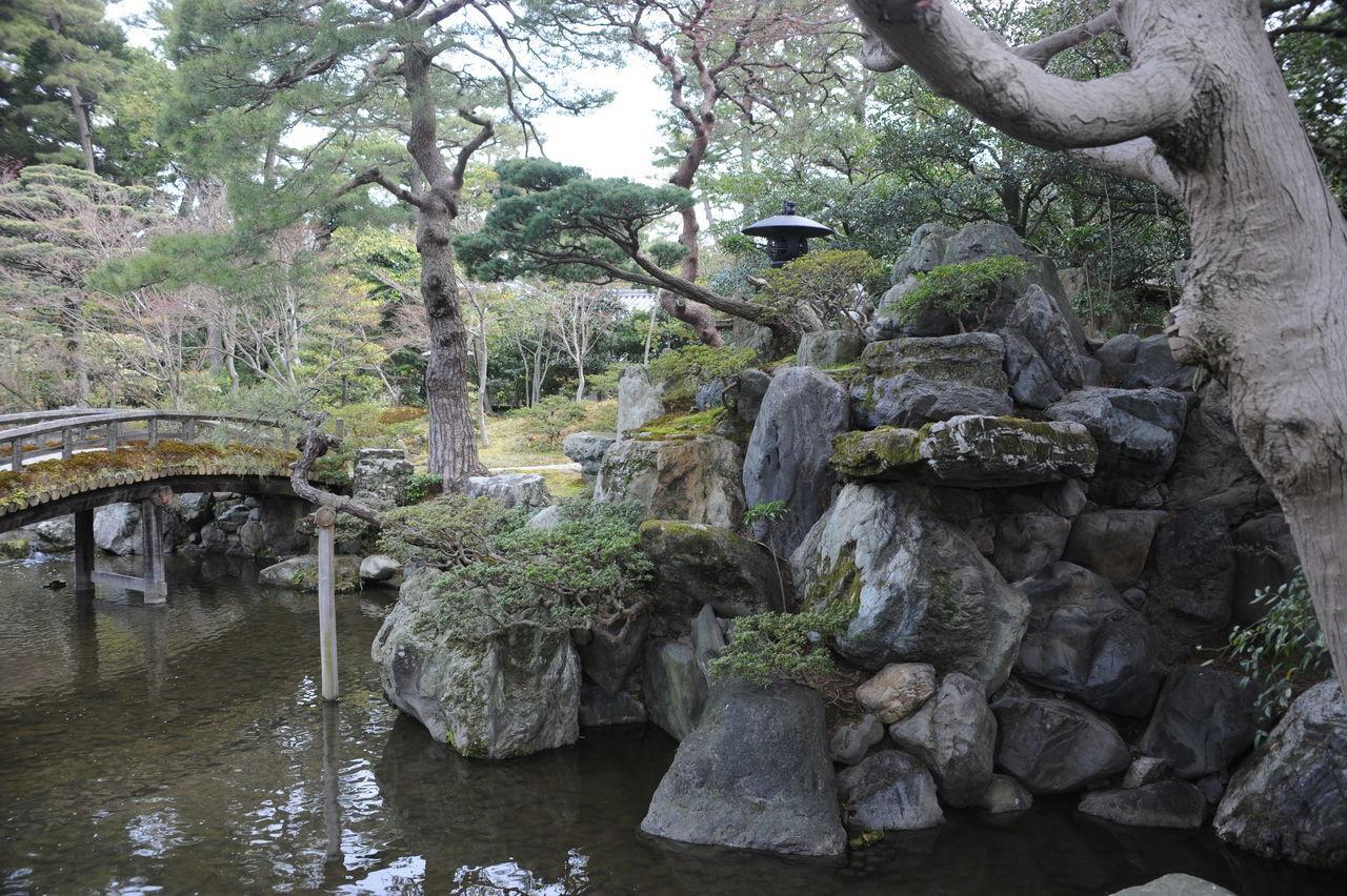 Imperial Japanese Garden Beauty In Nature Forest Growth Imperial Garden Japanese Bridge Japanese Garden Nature No People Outdoors Tranquility Tree Water Zen Garden