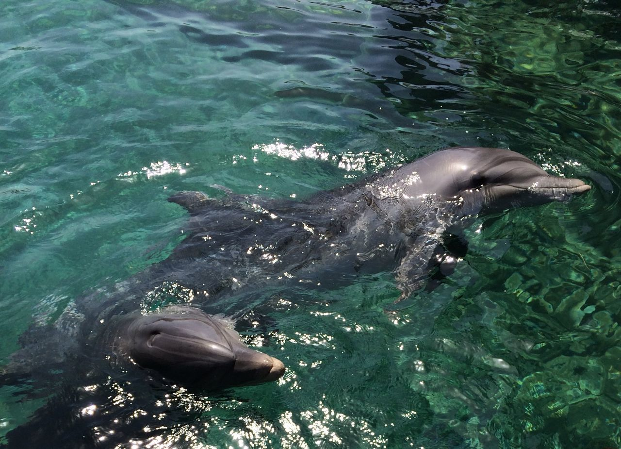 Mammals Dolphins Nature Nature_collection
