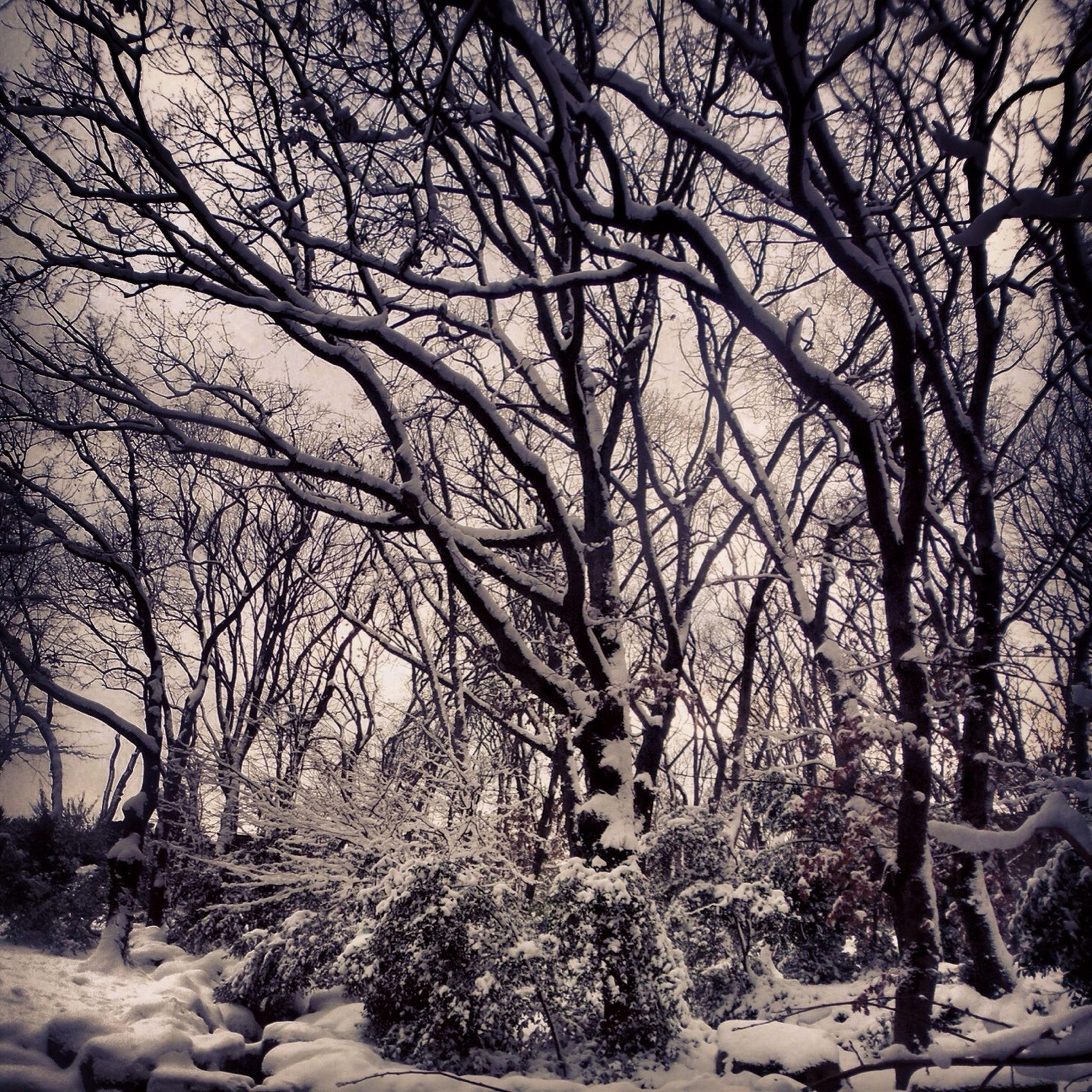 snow, winter, cold temperature, bare tree, tree, season, branch, weather, tranquility, tranquil scene, covering, nature, frozen, beauty in nature, scenics, landscape, covered, non-urban scene, cold, sky