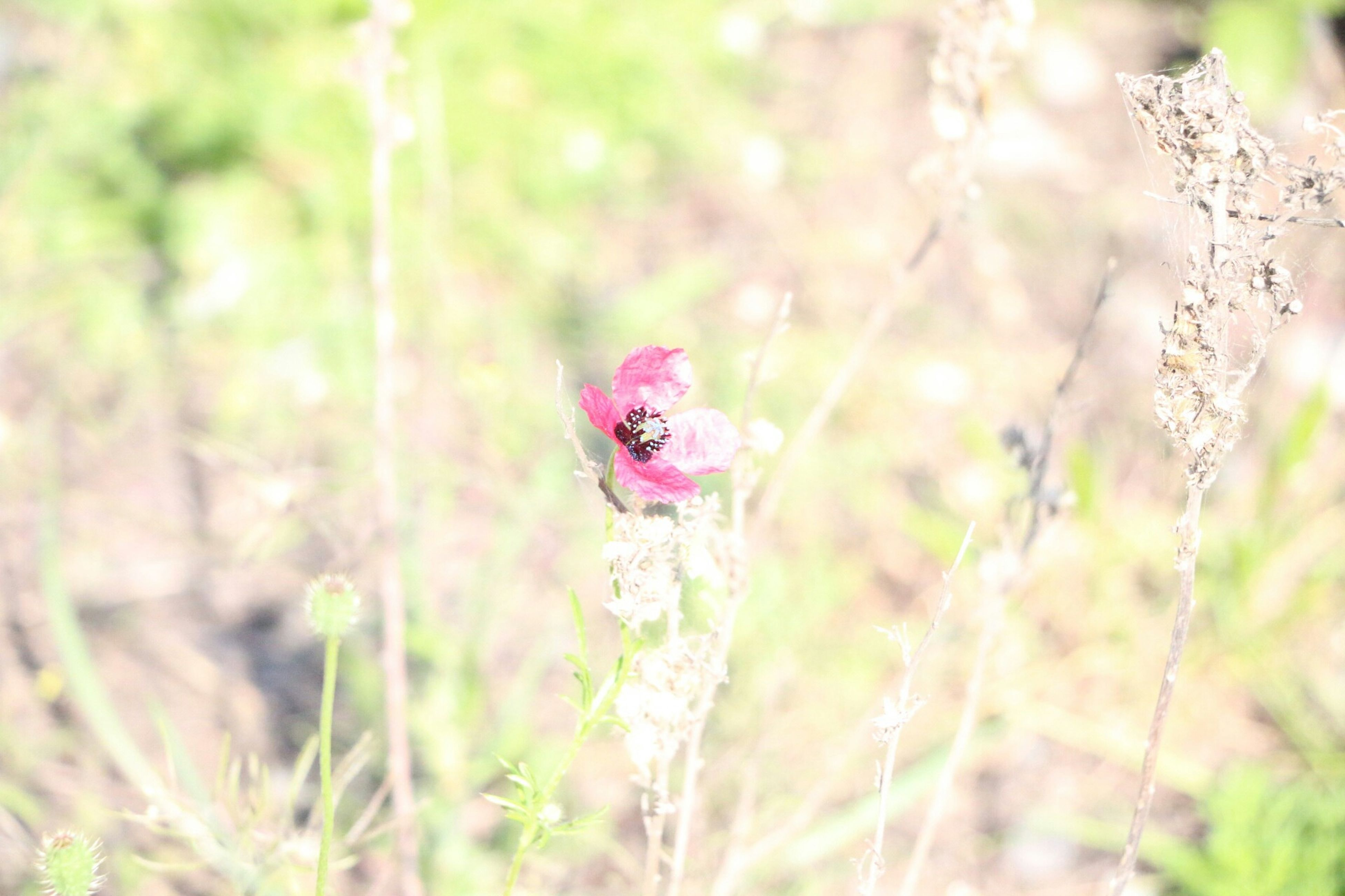 animal themes, one animal, flower, animals in the wild, wildlife, focus on foreground, growth, plant, selective focus, nature, field, insect, beauty in nature, close-up, freshness, fragility, stem, grass, day, outdoors