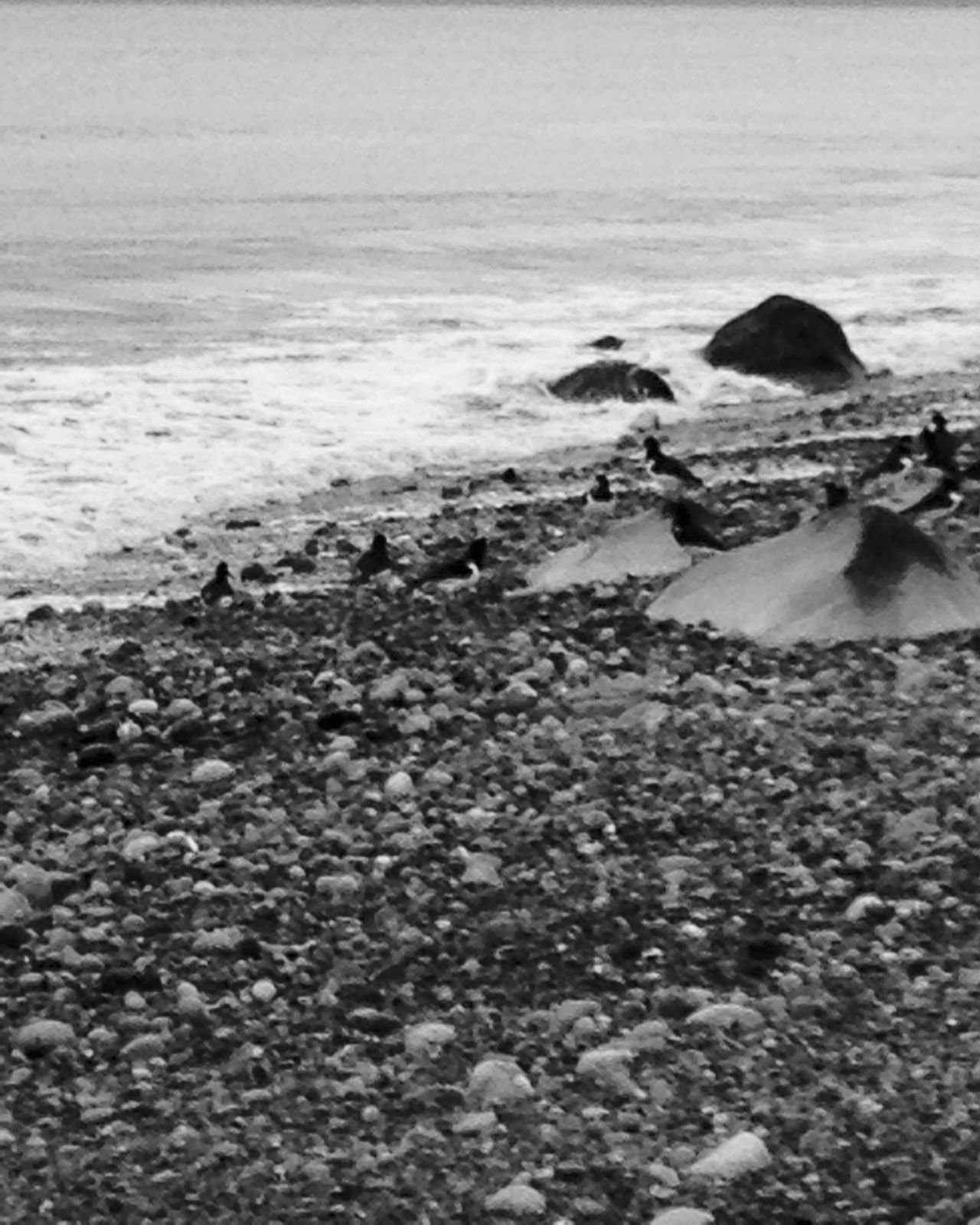 Shades Of Grey Being A Beach Bum Blackandwhite Black And White Black & White Blackandwhite Photography Black And White Photography Black&white Blackandwhitephotography Black And White Collection  Black And White Seaview Black And White Sea View Black And White Beach Scene Black And White Sea Collection Black And White Collection! Black And White Pebbles Black And White Nature Black And White Landscape Beach Seascape Splash Splashing Water Tide Tide Coming In Water_collection