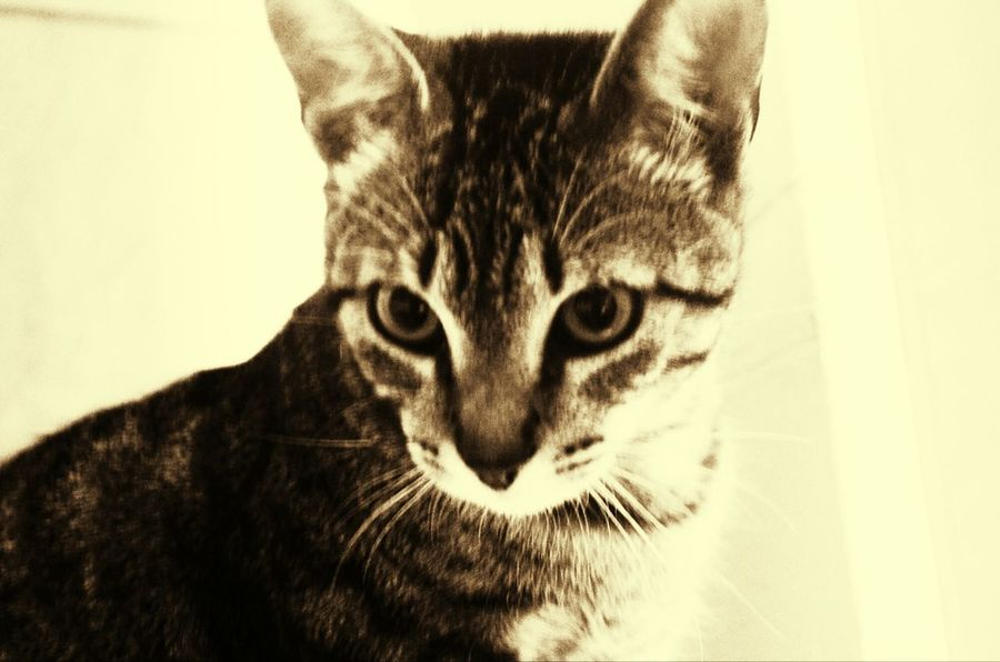 EyeEm Selects One Animal Domestic Cat Animal Themes Tranquility