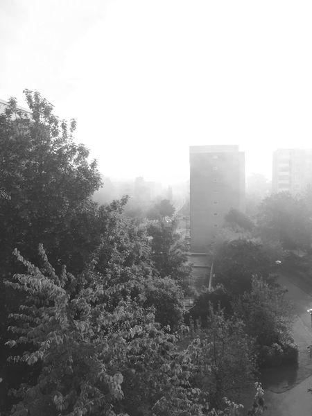 Foggy morning. Fog Foggy Morning