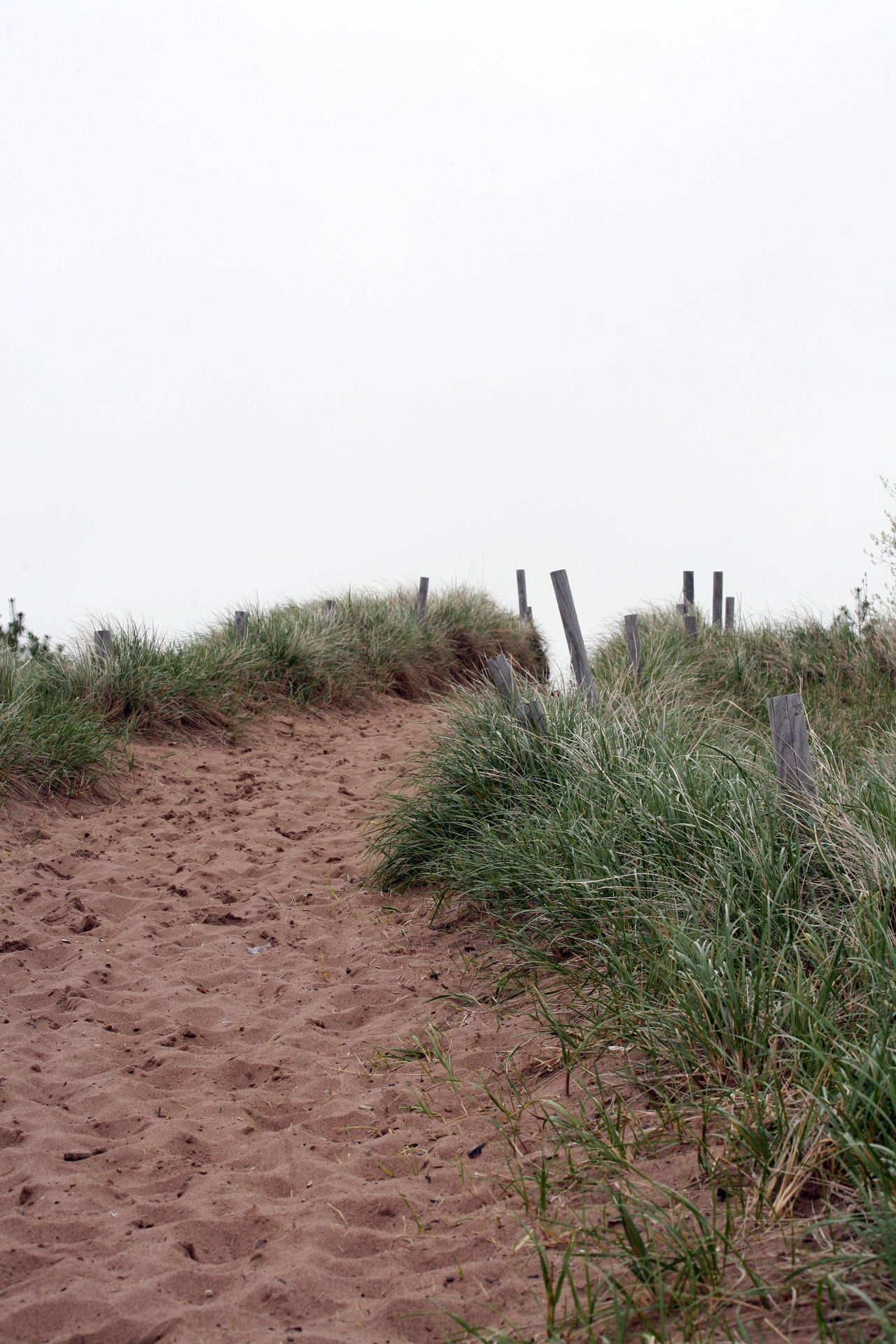 Sandy footpath walking up from a beach surrounded by tall green grass and wooden posts. Beach Day Footpath Grass Green Color Outdoors Sand Sky Tourism Walking Path Wooden Post