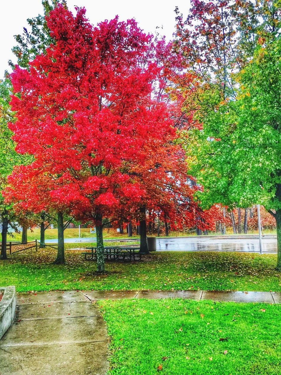 Fall Colors Fall Beauty Fall Trees Fall Leaves