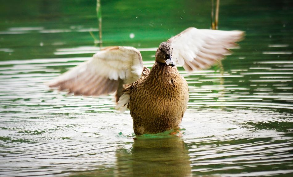 Beautiful stock photos of wings, Albacete, Animal Behavior, Animal Themes, Animals In The Wild