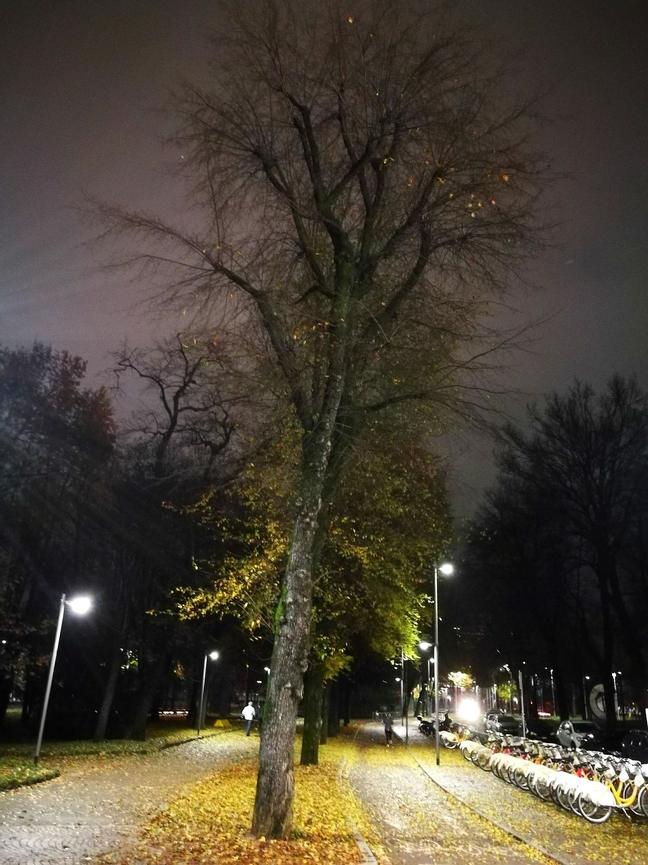 Triennale Triennalemilano Tree Nature No People Branch Growth Night Outdoors Bare Tree Sky Beauty In Nature Star - Space