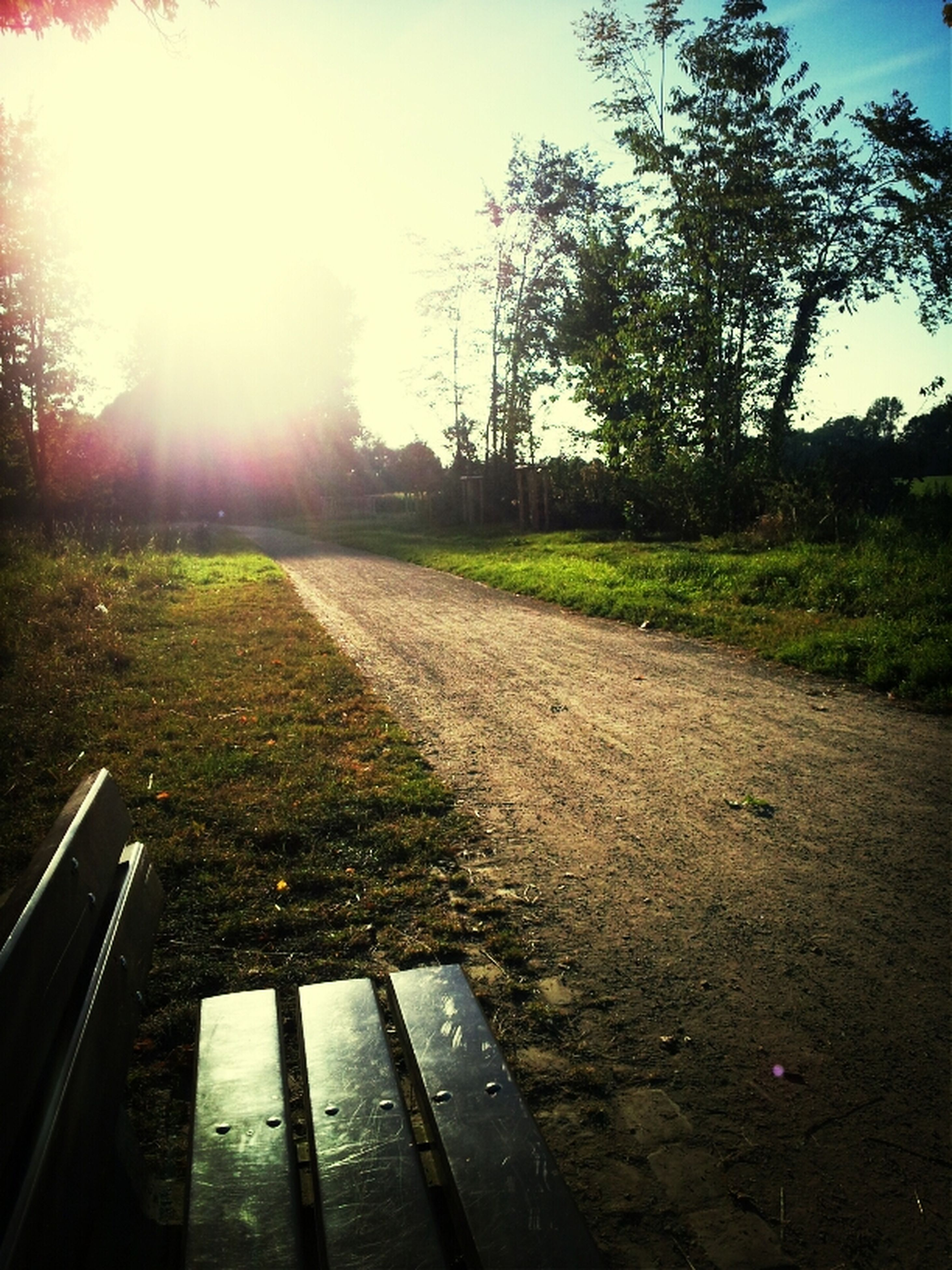 sun, sunbeam, sunlight, lens flare, tree, grass, sky, field, tranquility, the way forward, sunny, nature, landscape, clear sky, tranquil scene, bright, sunset, road, diminishing perspective, vanishing point