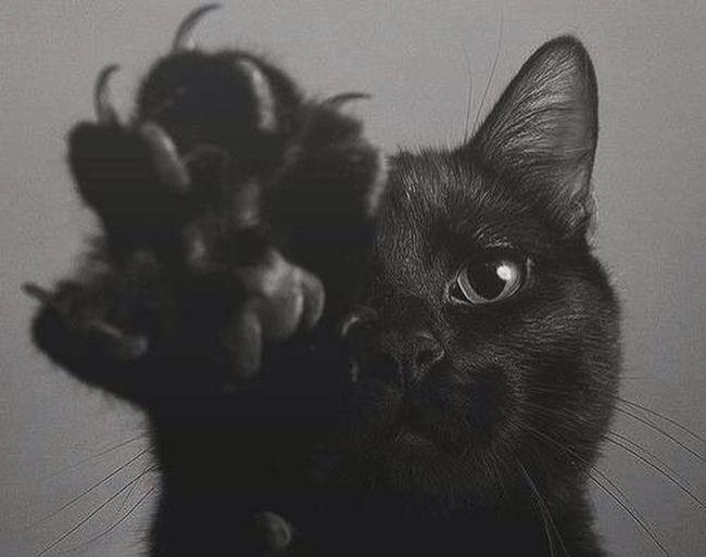 Baby Cat Miaou ??