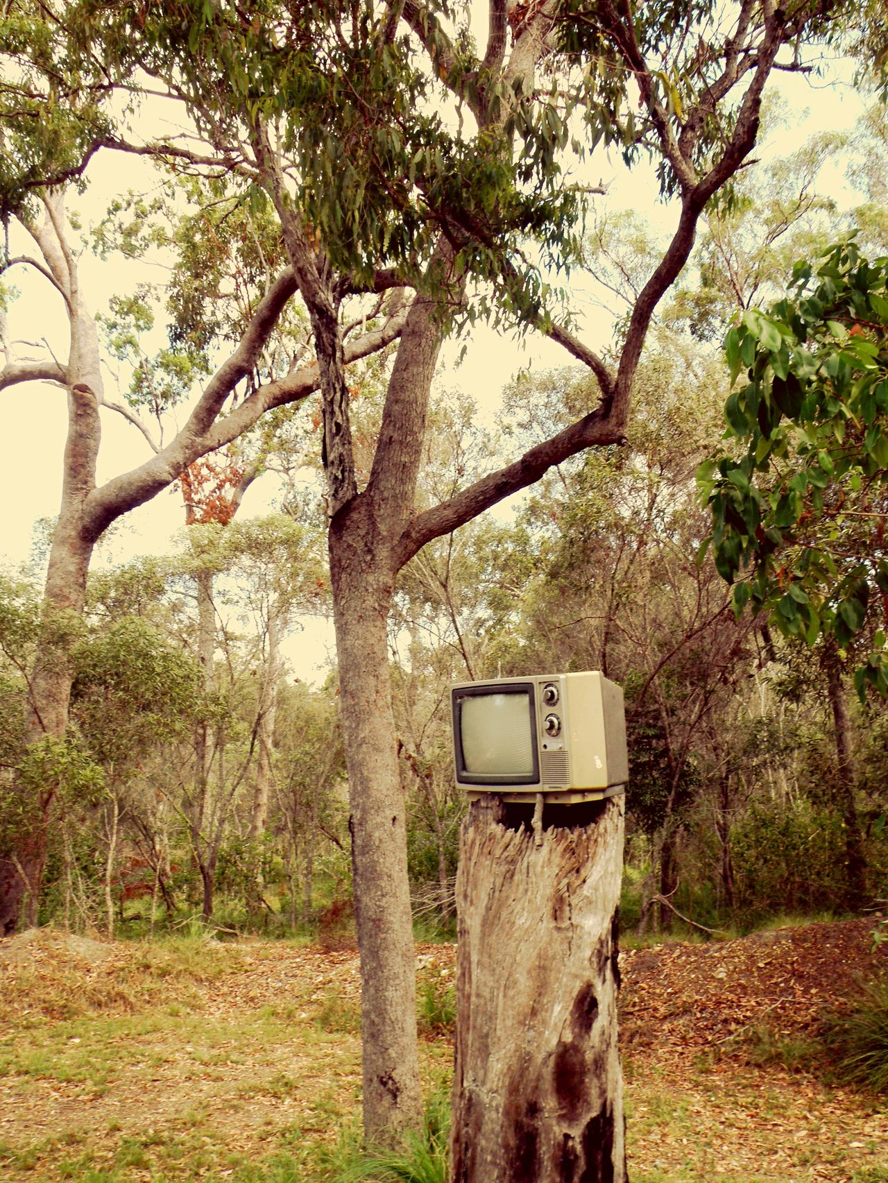 Beautiful stock photos of television, Abandoned, Antique, Branch, Clear Sky