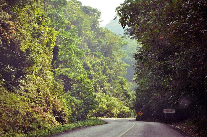 Landscape Road Trees Treescape Travel Impressionism