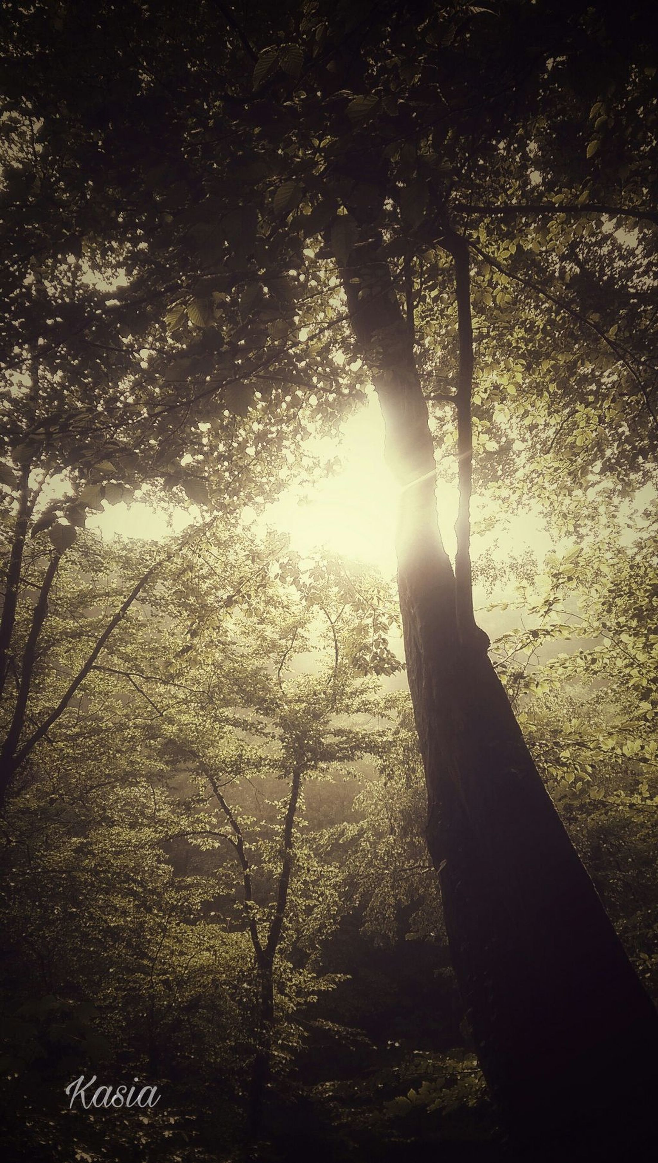 sunlight, no people, nature, backgrounds, sunbeam, tree, indoors, close-up, sky, day, frosted glass