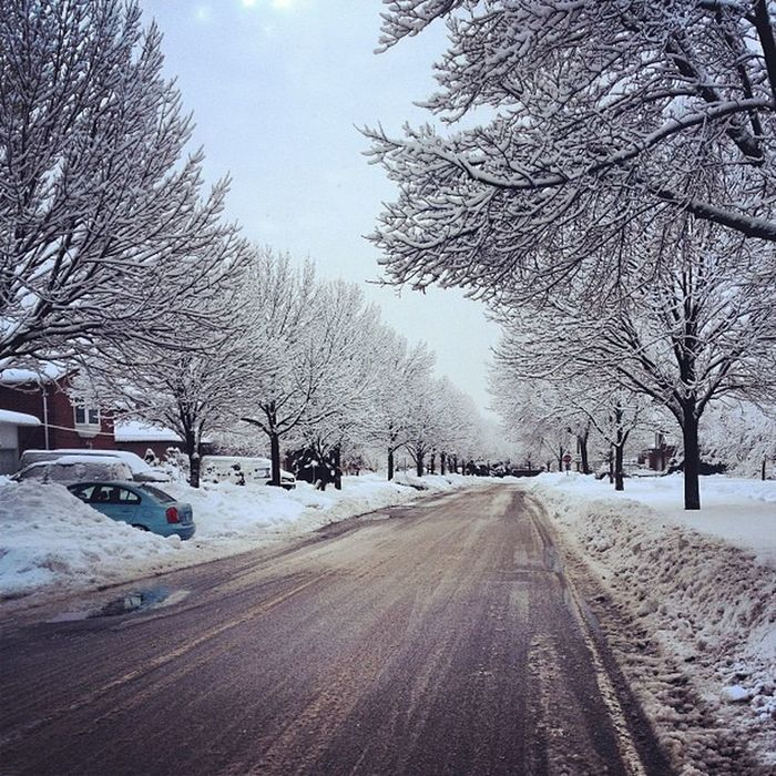 Morning Walk To  School In The Morning Love The Snow Omg So Pretty Especially On The Trees Girls