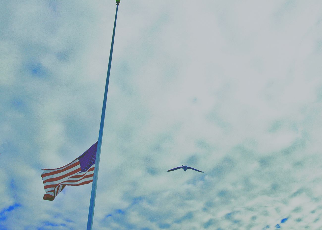 In Morning Half Mast Lone Gull Sky Passing