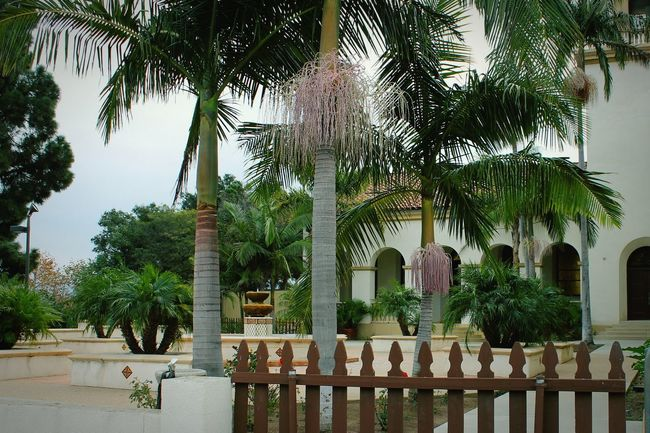 Architecture Courtyard  Palm Trees Spanish Style