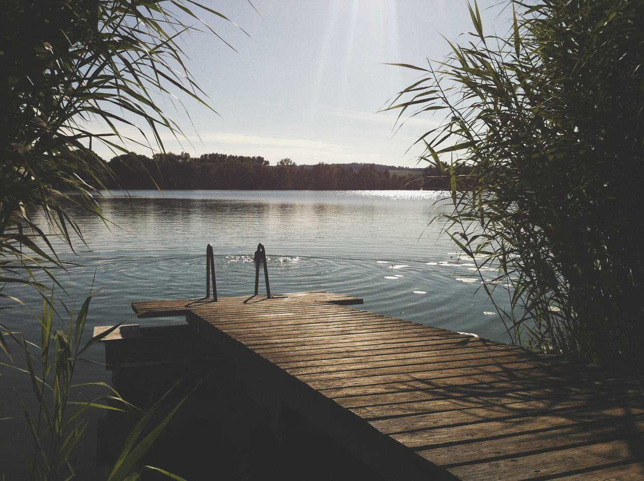 Water Lake Nature Leisure Activity Tranquility Tree Scenics Beauty In Nature Silhouette Men Stage Landing Stage Jetty Wood Summer Spring Youth Reeds Rushes Calm Reed Swimming Swimm River Blue Sky Sommergefühle EyeEm Selects