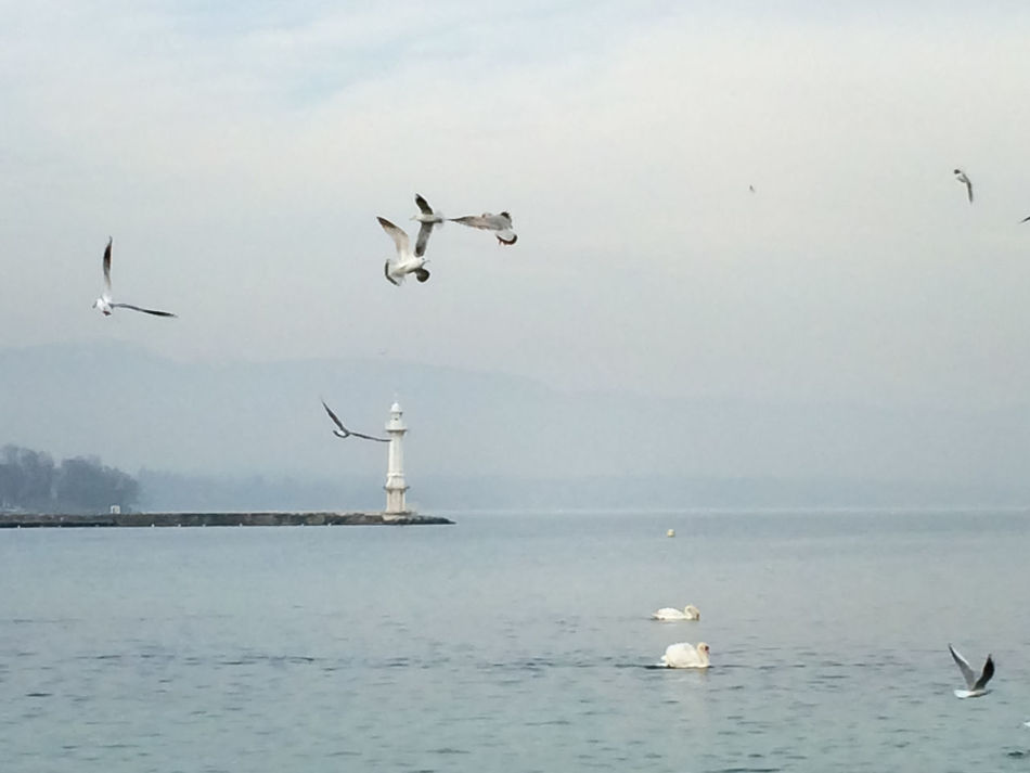 Animal Themes Animal Wildlife Animals In The Wild Beauty In Nature Bird Day Flock Of Birds Flying Horizon Over Water EyeEmNewHere Lighthouse Mid-air Nature Nautical Vessel No People Outdoors Scenics Sea Seagull Sky Spread Wings Swan Tranquil Scene Tranquility Water