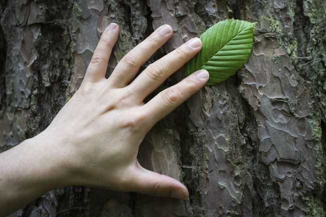 Baum Blatt Close-up Detail Hand Leaf Lifestyles Natur Nature Nature_collection Naturelovers Naturverbundenheit Outdoors Part Of Nature Touching Tree Tree Bark Unrecognizable Person