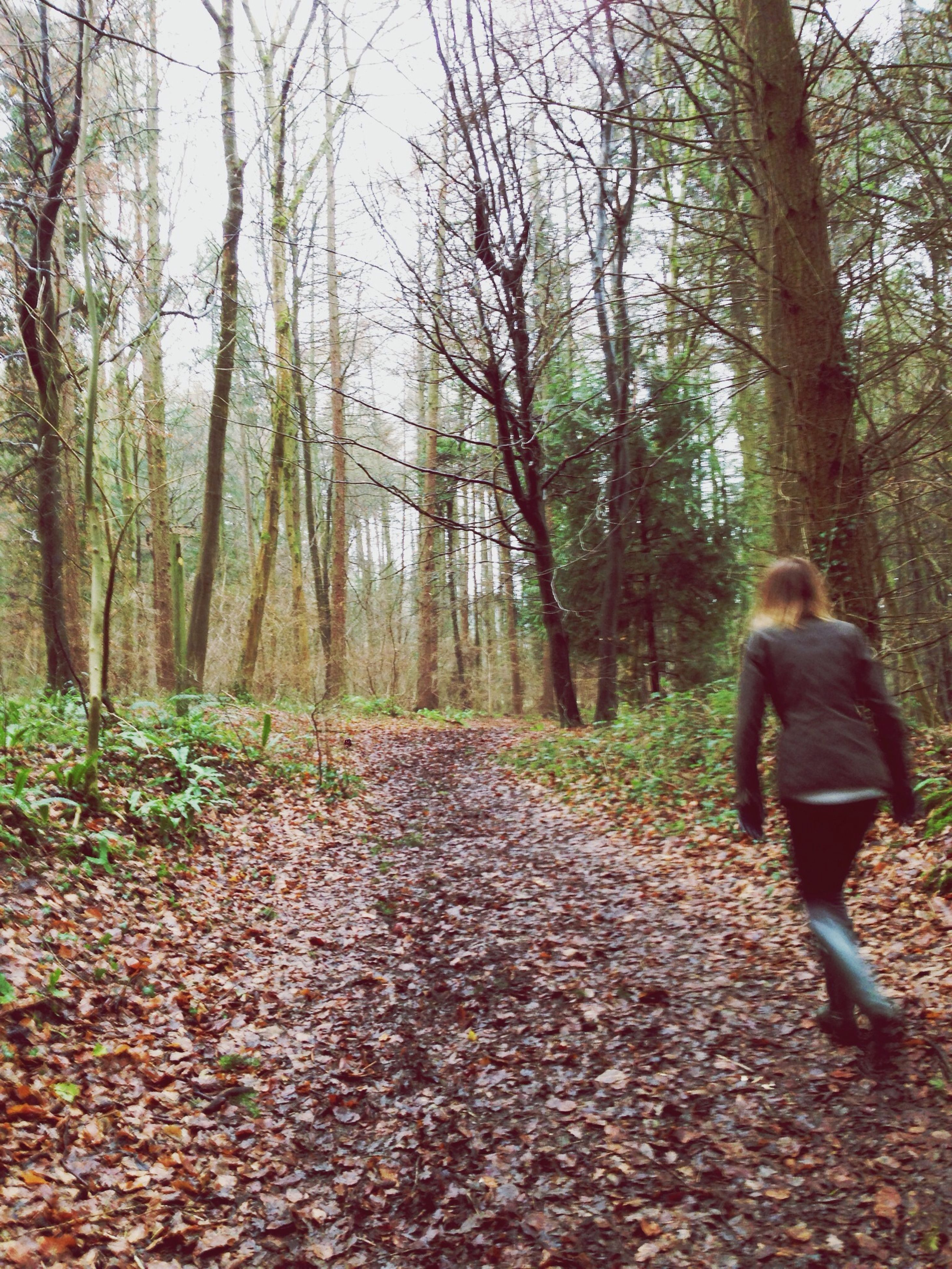 tree, lifestyles, forest, leisure activity, full length, rear view, casual clothing, standing, nature, tranquility, tree trunk, the way forward, walking, tranquil scene, woodland, growth, autumn, men
